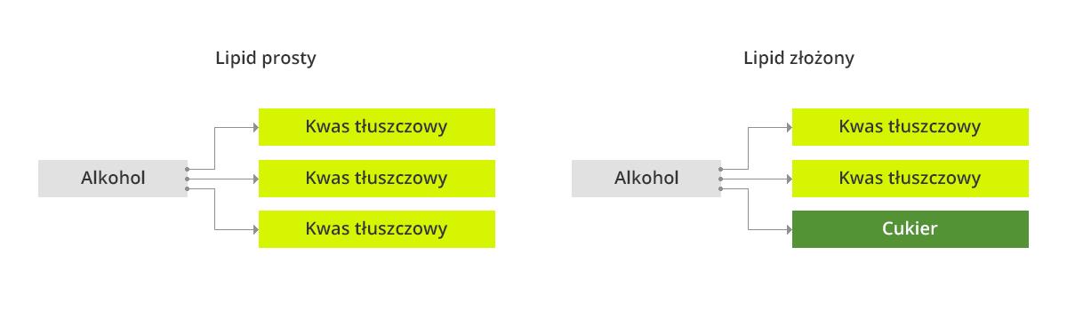 co_to_jest_tluszcz_calosc